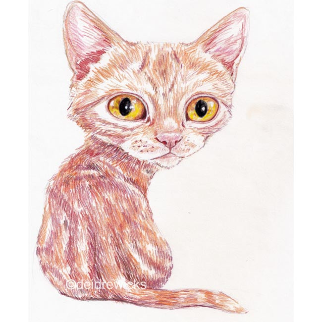 Coloured pencil drawing of an orange tabby with large eyes looking over it's shoulder