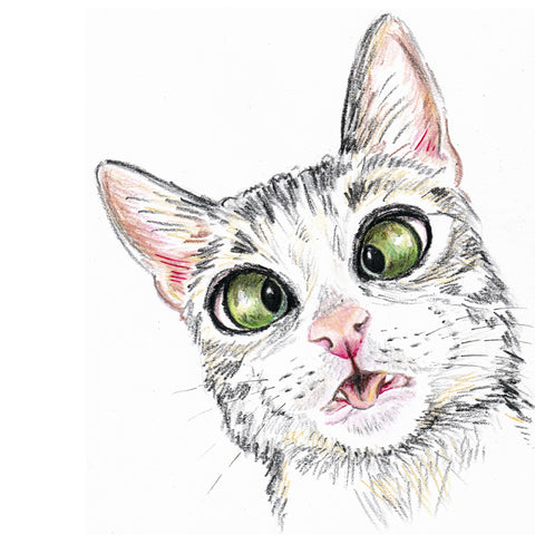 Crayon drawing of a cat crossing her eyes