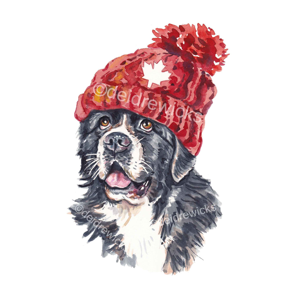 Watercolour painting of a Newfoundland dog wearing a knitted toque, or hat
