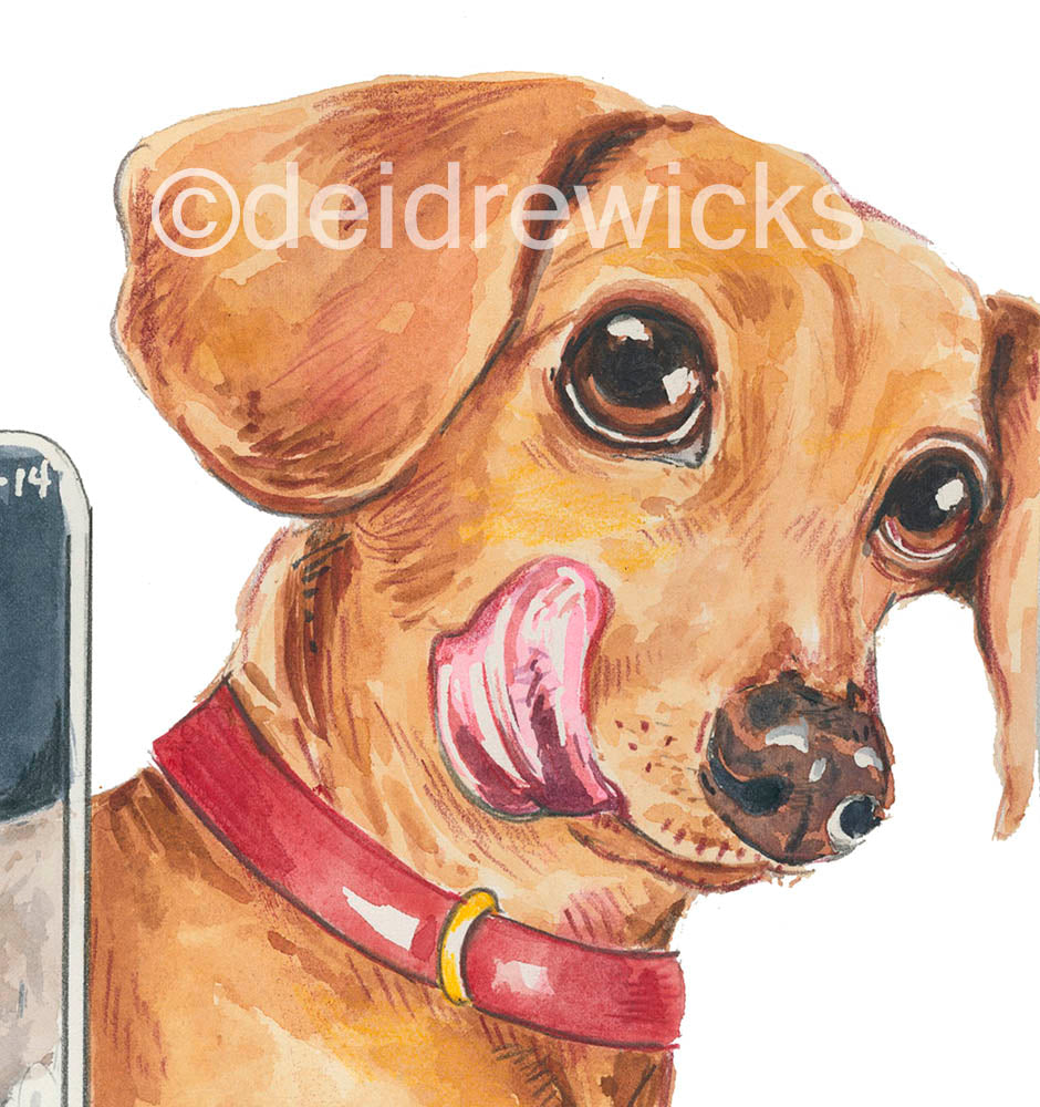Close up of a watercolor of a dachshund licking his lips