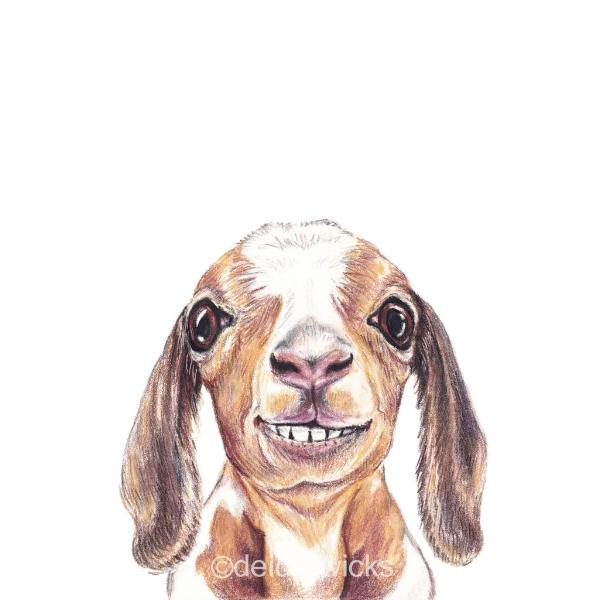 Coloured pencil drawing of a baby goat with a mischievous grin