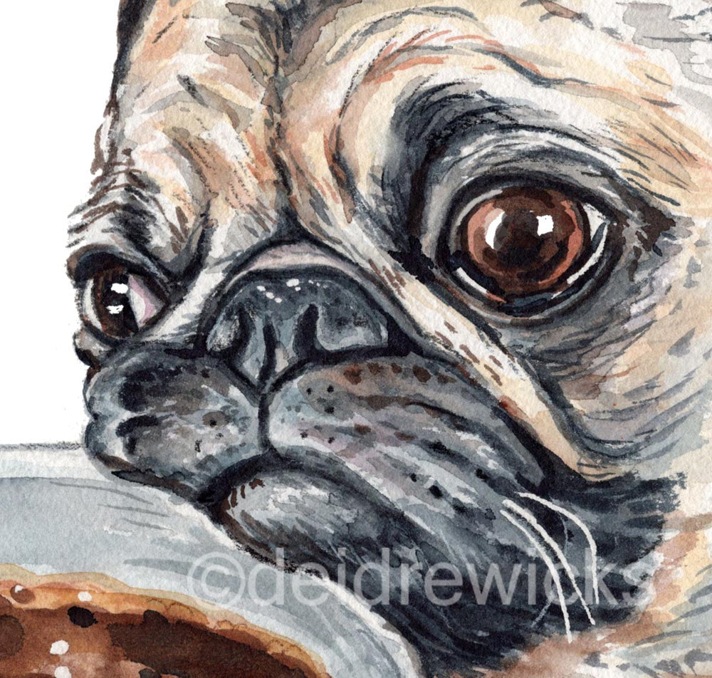 Close up of a watercolour pug painting by Deidre Wicks