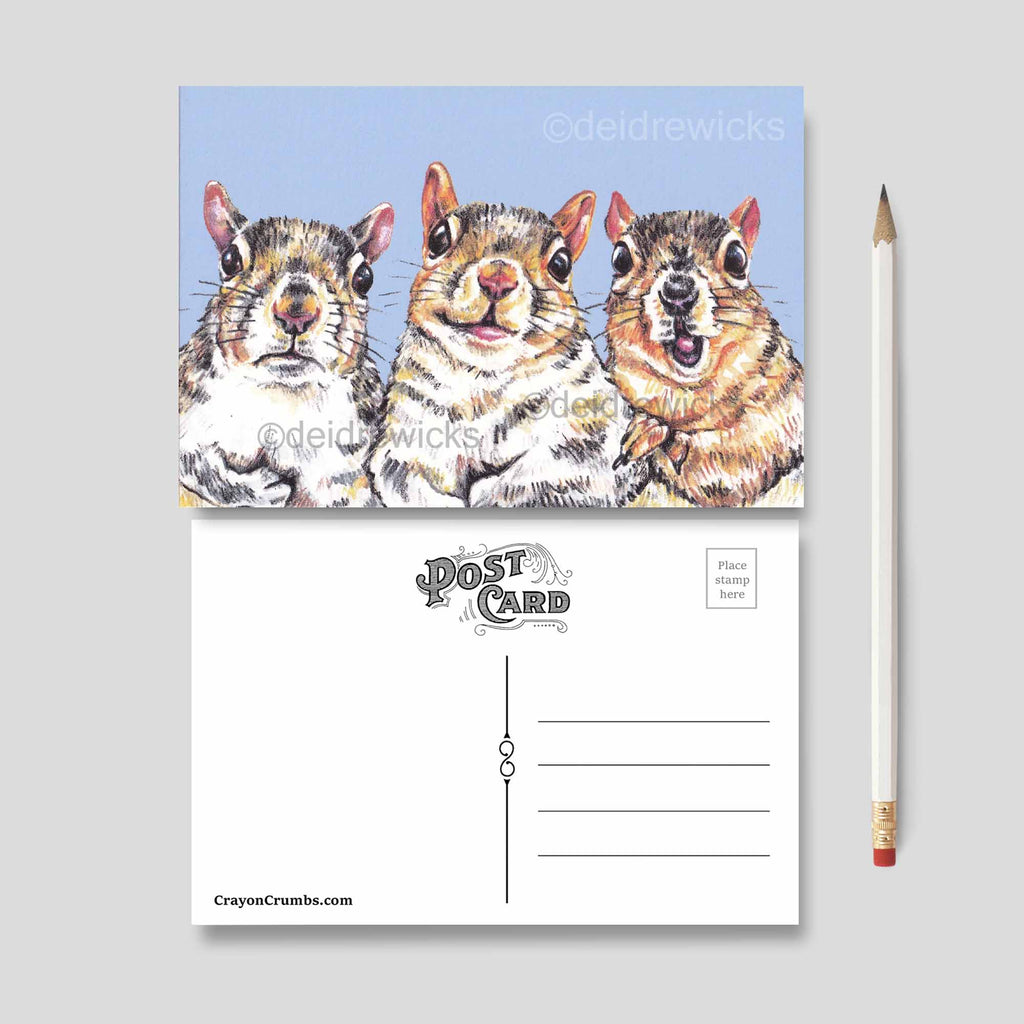 5 pack funny squirrel postcard set to send an animal lover by Crayon Crumbs