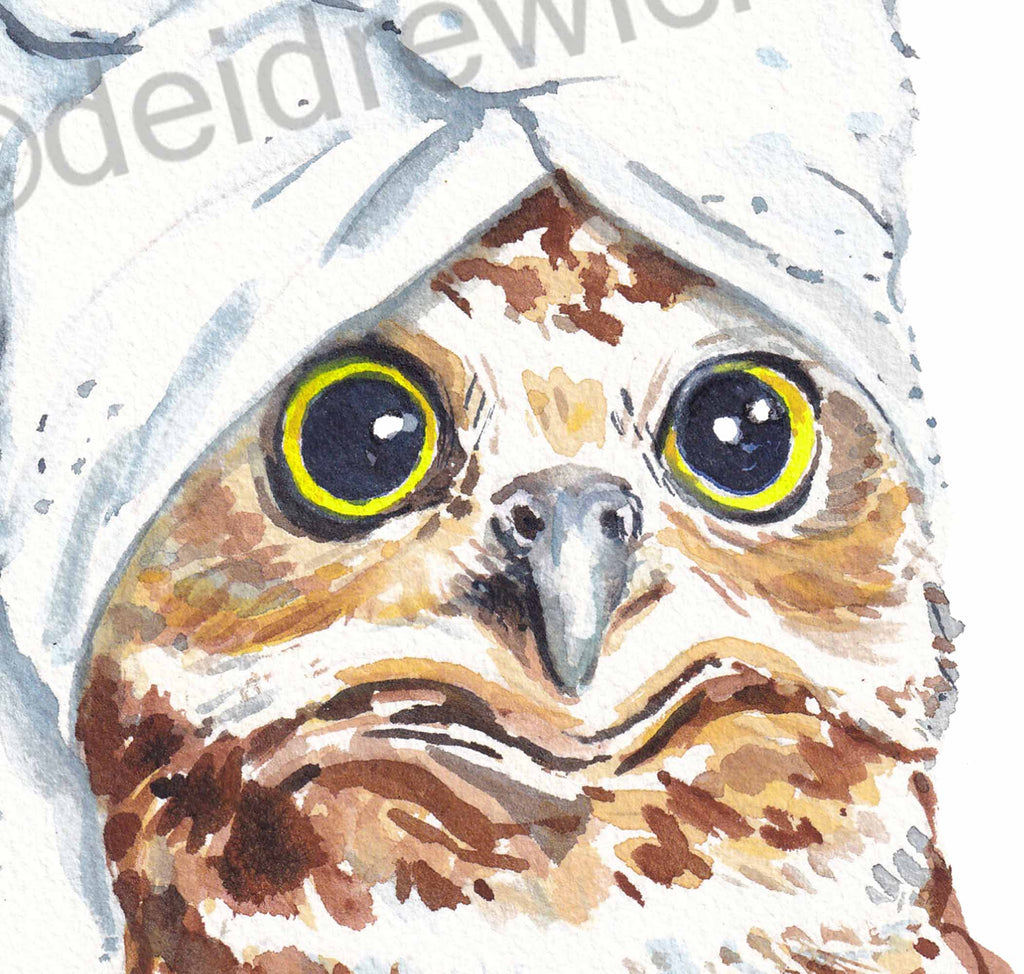Detail of an owl watercolour painting by Deidre Wicks. This big eyes!!