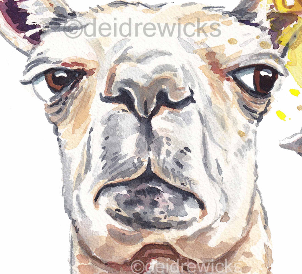 Close up of a llama watercolour, this llama is not impressed
