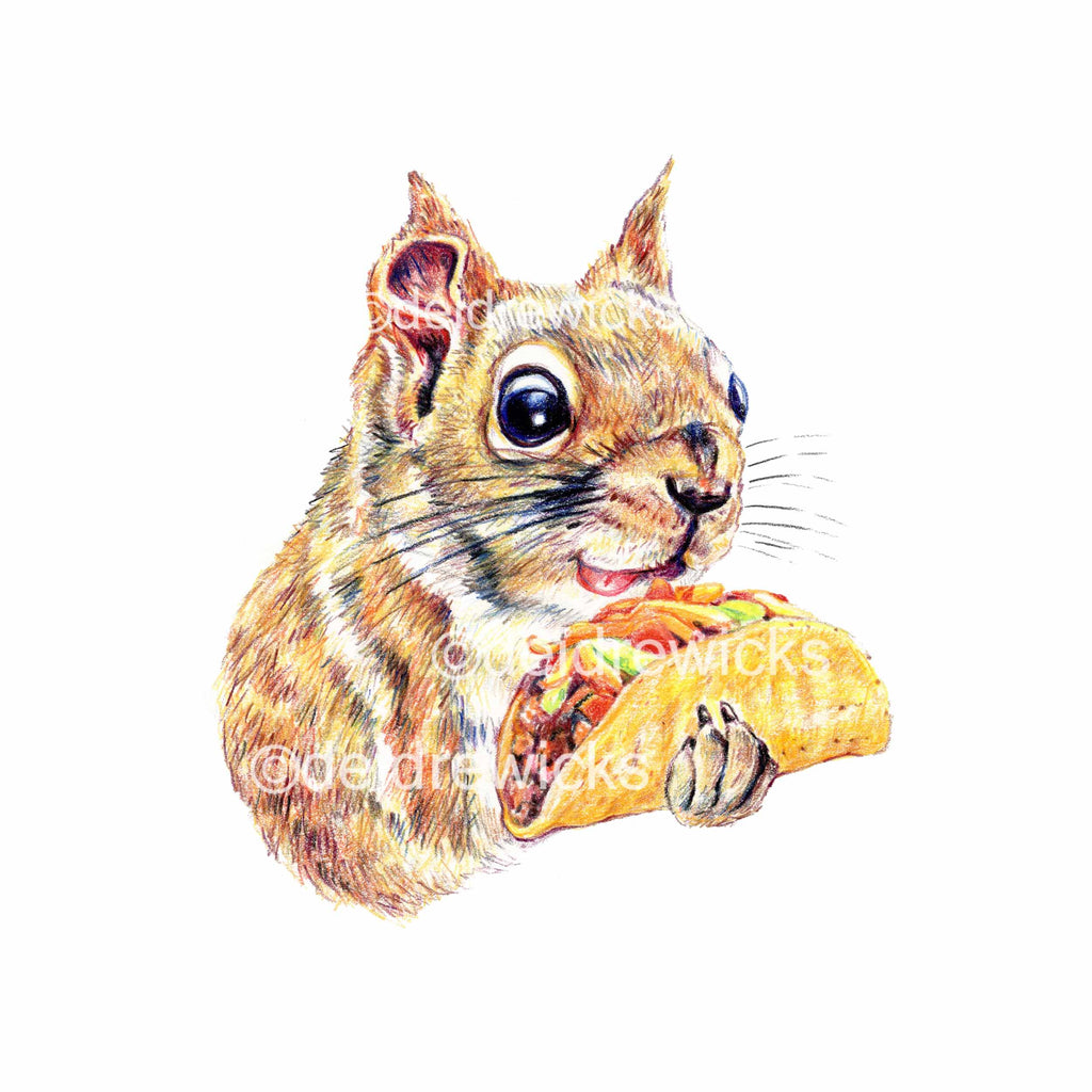 Coloured pencil drawing of a hungry squirrel holding a taco. Archival fine art print by Deidre Wicks