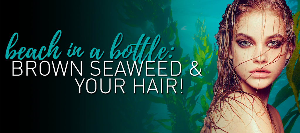 Beach in a Bottle: Brown Seaweed & Your Hair!
