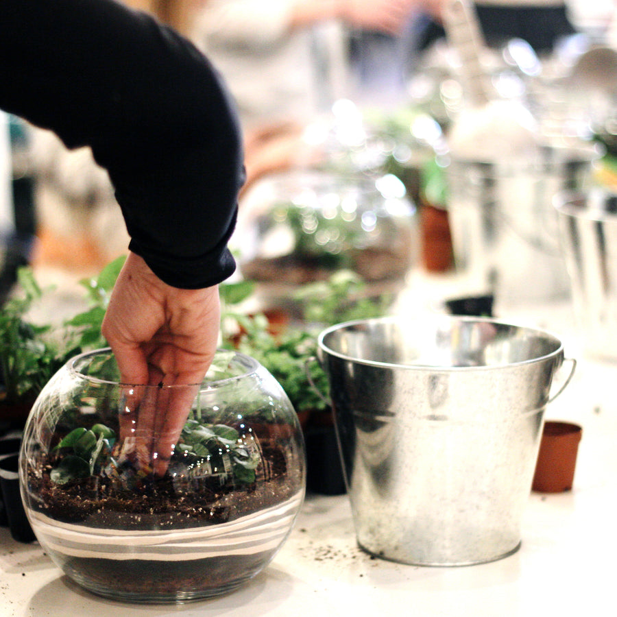 Terrarium Workshop