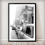 Lama in taxi - Fashion Photography Poster - Rock Salt Prints Ltd