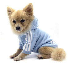 Adidog Sweater for Small Dogs/Cats