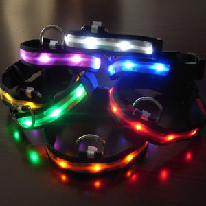 LED Dog Adjustable collar