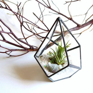 Glass Terrarium Flower Pot - windypebble
