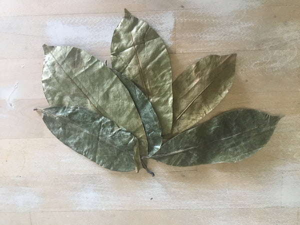 Organic soursop leaves for tea