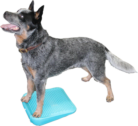 FitPAWS Dog Balance Ramp