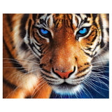 Tiger eyes - Kit broderie diamants - Broderiesdiamants.fr