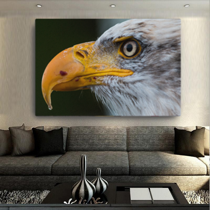 Bald Eagle Canvas - Cotonz Online Shopping