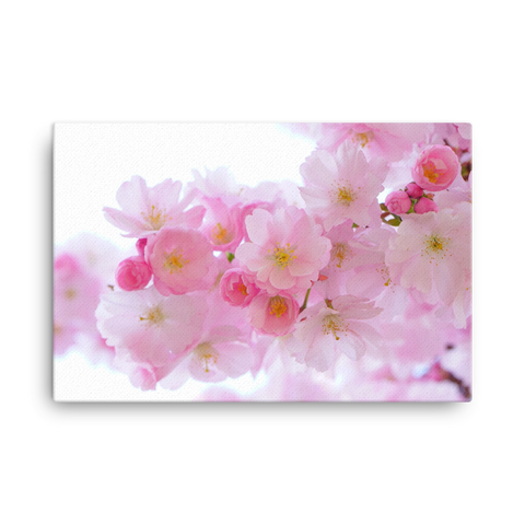 Japanese cherry trees Canvas - Cotonz Online Shopping