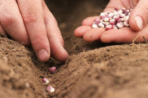 Regionally-adapted? Organic seed? What about it?