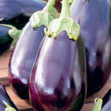 Black Beauty Eggplant - Heirloom!