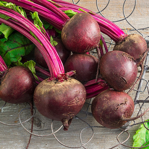 Detroit Dark Red Beet - Heirloom!