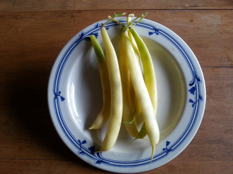 Eastern Butterwax Bean
