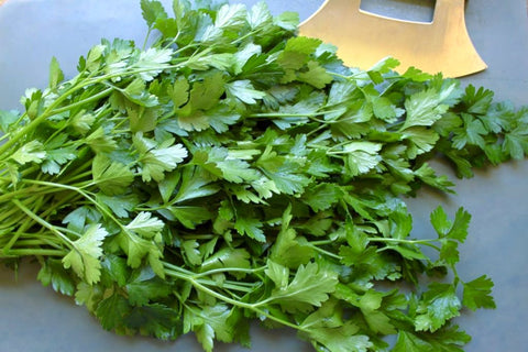 Giant Italian Flat Leaf Parsley