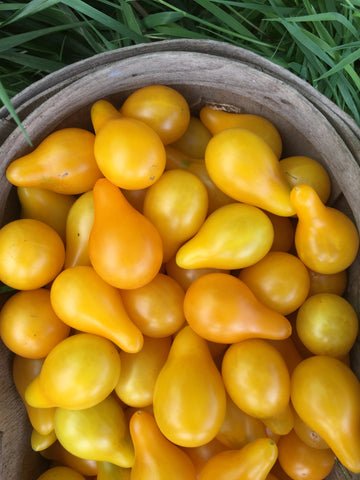 Yellow Pear Tomato - Heirloom!