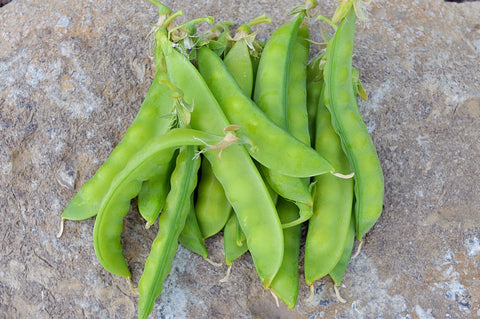 Norli Snow Pea - Heirloom!