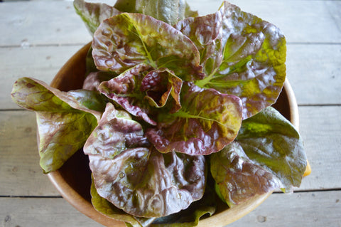 Rouge d'Hiver Lettuce - Heirloom!