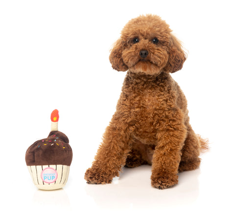 Birthday Cupcake Dog Toy