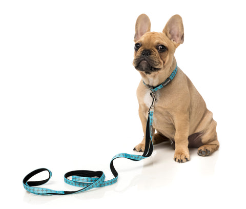 Saint Yeezy Dog Lead Extra Small Blue