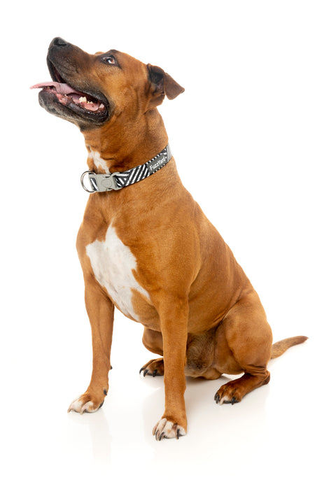 Northcote Dog Collar