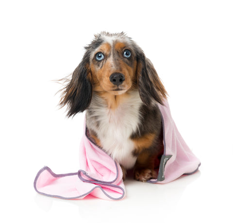 Microfibre Drying Towel For Puppies,  Pink With Grey Trim