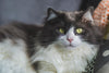 Cоmmоn Cat Hеаlth Issues You Should Know