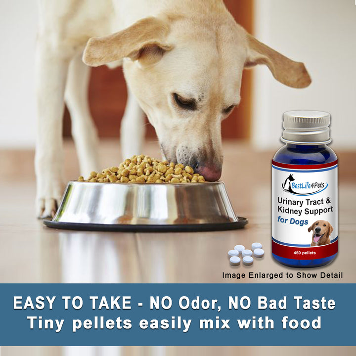 Dog Urinary Tract Infection and Kidney Support