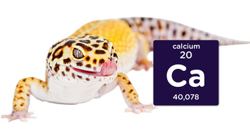 Why Is Calcium Important for Reptiles?