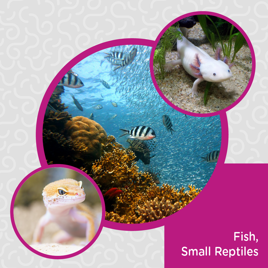 Obie's Nibbles for Fish & Small Reptiles