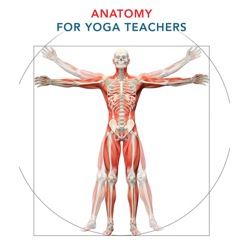 Teacher Tune Up: Anatomy for Yoga Teachers in Fort Collins, CO