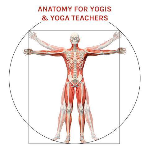 Anatomy for Yogis & Yoga Teachers