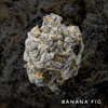 Banana Fig by Fig Farms