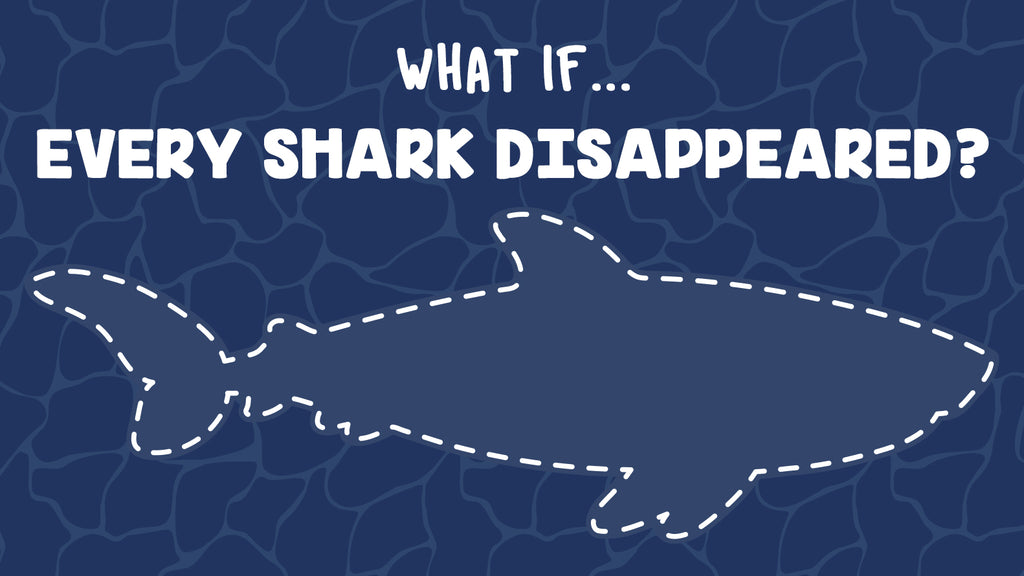 What if... Every Shark Disappeared?