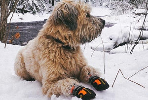 Dog Shoes-Dog Boots-Protection from Ice and Snow