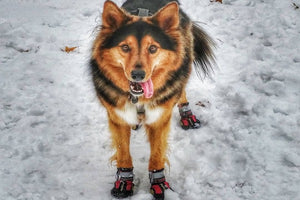 Dog Shoes-Dog Boots-Winter Paw Protection