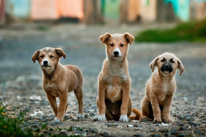 10 Great Dog Charities