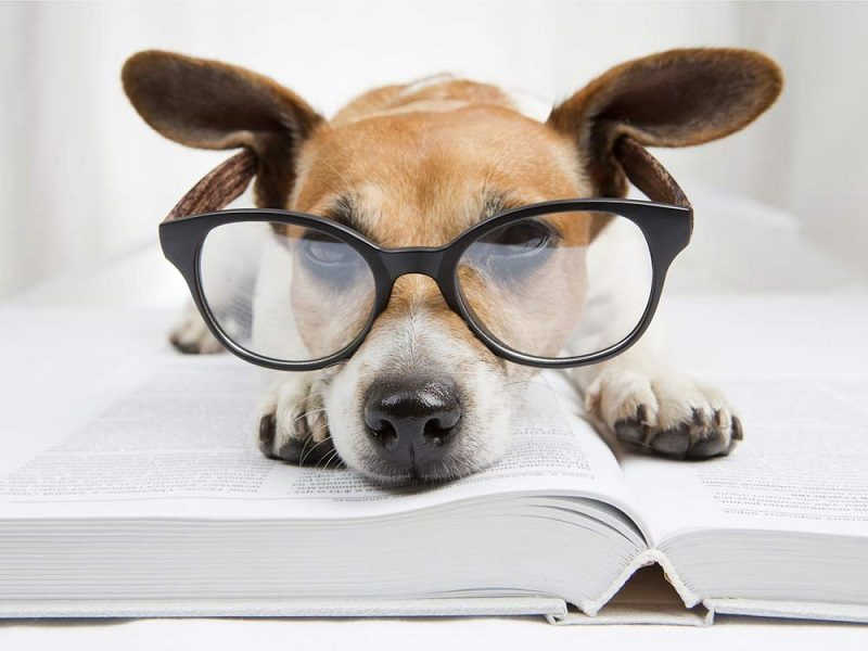 my-busy-dog-pet-supplies-intelligent-dog