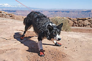 mybusydog-how-to-use-dog-shoes