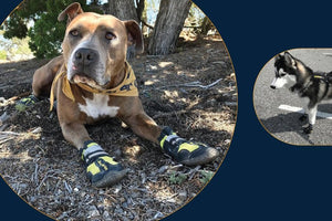 best-dog-shoes-urban-vs-rural-terrain