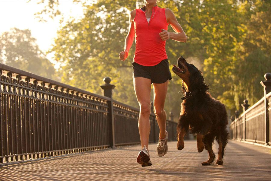 options-effective-safe-dog-workout
