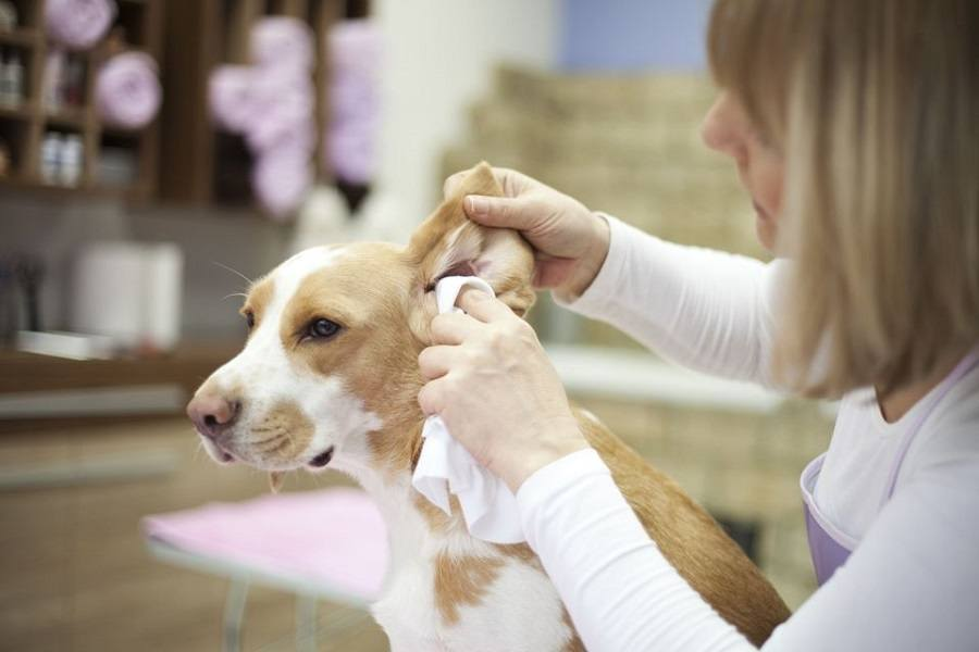 Determining The Ideal Ear Cleaner for Your Dog