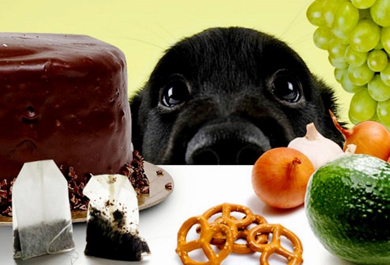 my-busy-dog-pet-supplies-dangerous-dog-foods